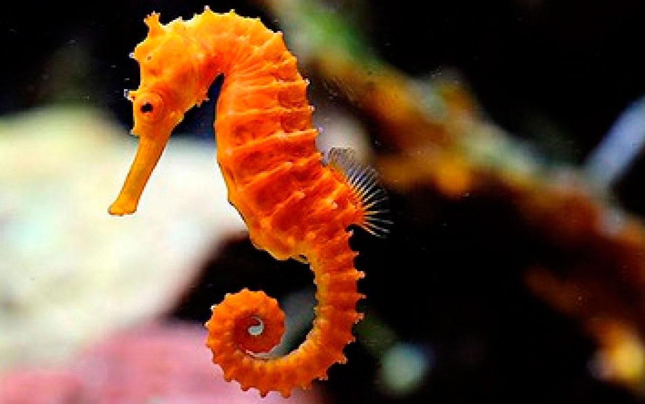детские загадки про морских обитателей