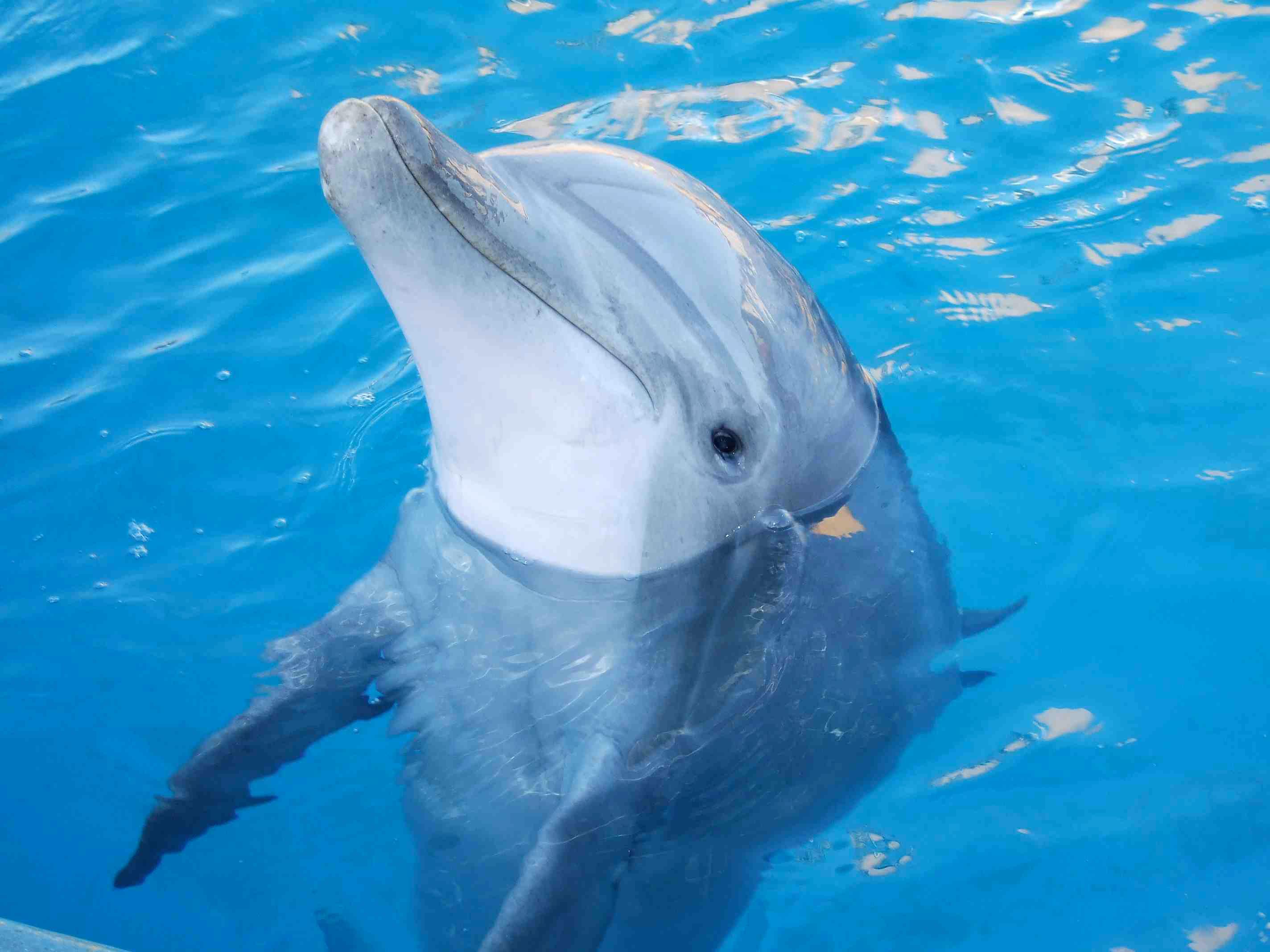 загадки про обитателей морских глубин для детей