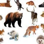 Загадки про диких животных с ответами