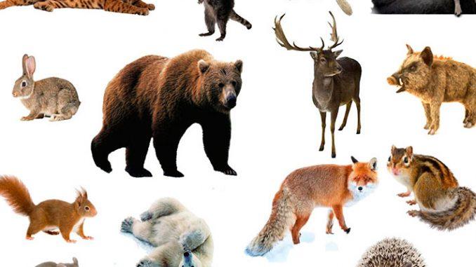 загадки про диких животных