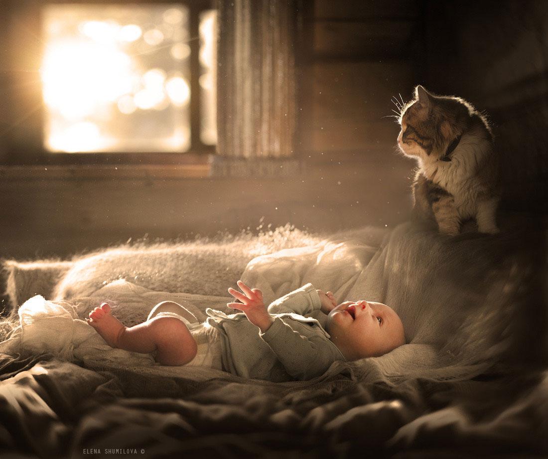 детские стихи про кошек