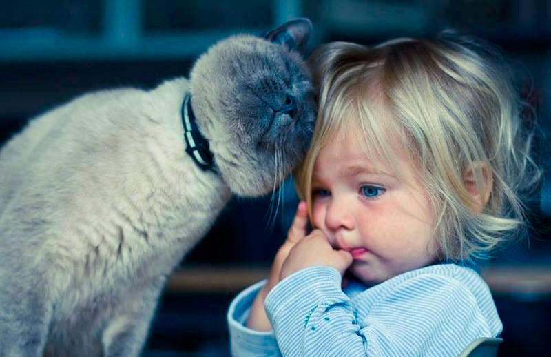 детские стихотворения про кошек
