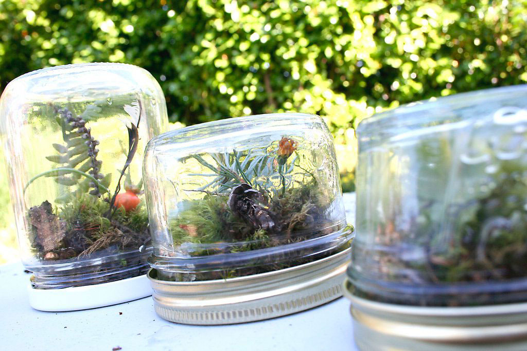 baby glass jar terrarium