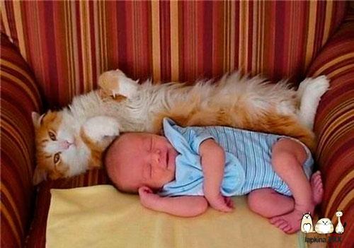 идеи для фотосессии новорожденных: дети и коты
