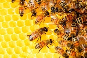 детские стихи про пчел