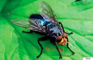 детские стихи про насекомых: муха