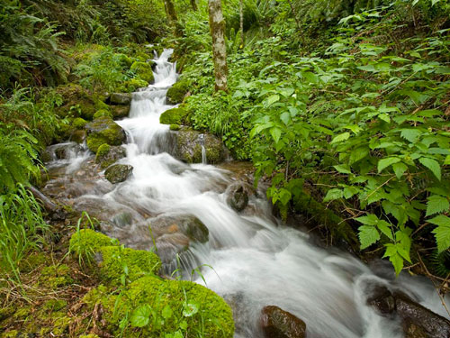Poems about nature for children: stream