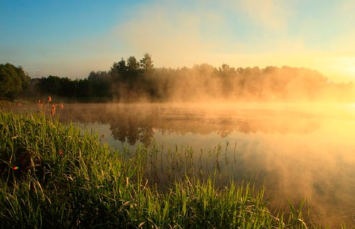 Poems about nature for children: fog