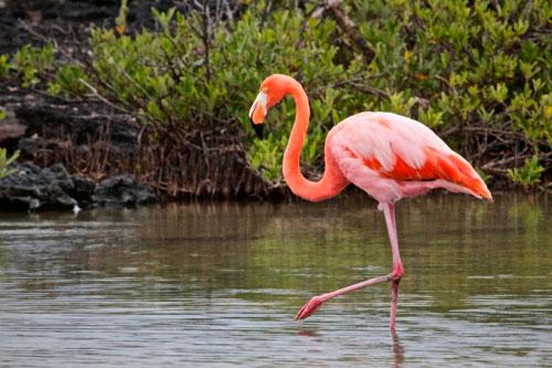 загадки про птиц для детей с ответом фламинго