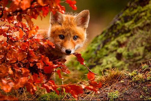 Poems about nature for children: autumn