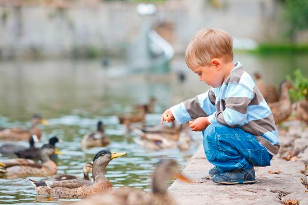 детские загадки про птиц