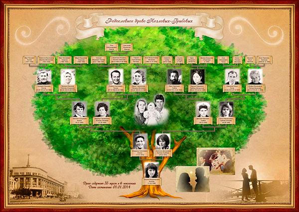 генеалогического древа фото