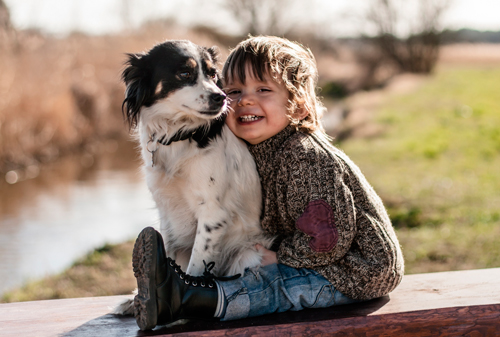загадки про домашних животных для дошкольников