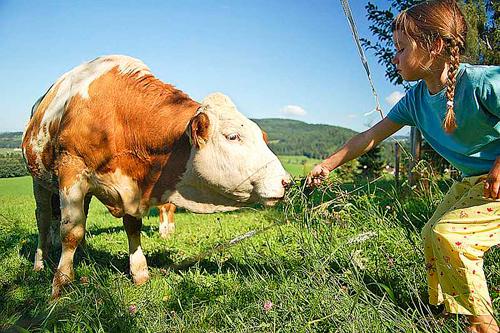 загадки про домашних животных для учеников начальной школы