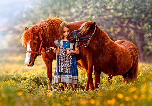 детские загадки про домашних животных: лошадь