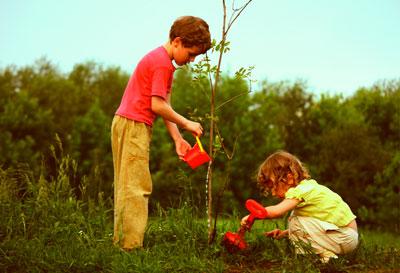 загадки о деревьях для школьников