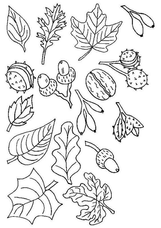 Шаблоны листьев для вырезания из бумаги для детей школьного возраста