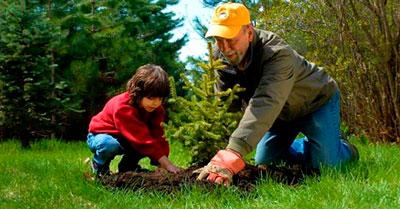 Стихи про деревья для детей в детком саду