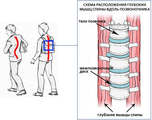 лучшие упражнения для спины для детей дошкольного возраста