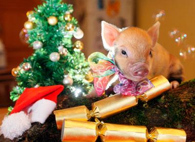 стихи про год свиньи для детей в школу