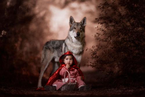 Стихи про волка для детей в детском саду