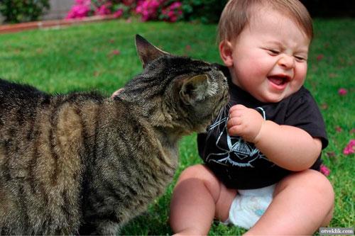 Загадки про кошку для детей 3-5 лет