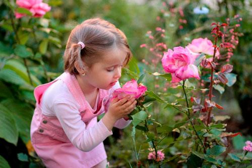 Красивые стихи про розы для детей