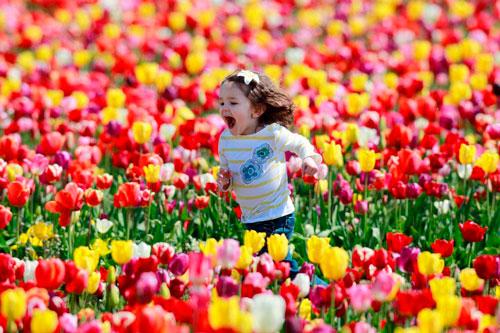 Загадки про тюльпан для детей 5-7 лет