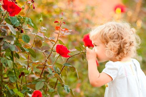 детские загадки про розу