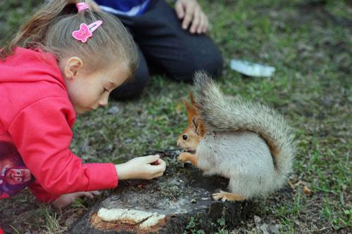 Лучшие загадки про белку для детей в стихах