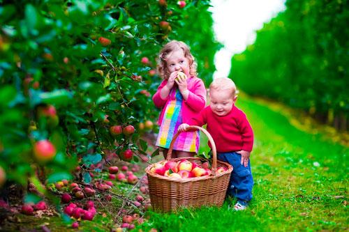 Загадки про яблони для детей