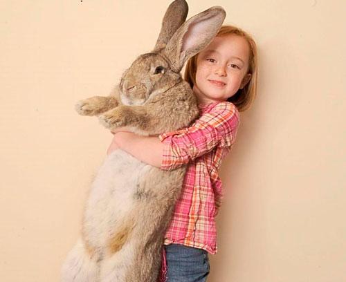 Красивые стихи про зайца для детей 5-7 лет