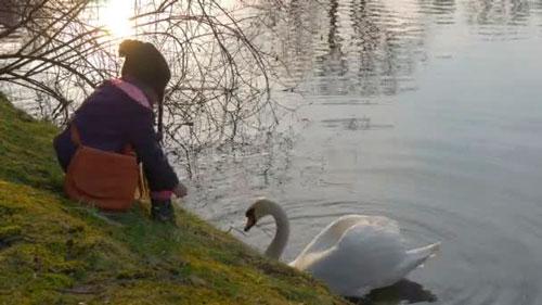 Красивые стихи про лебедей для детей