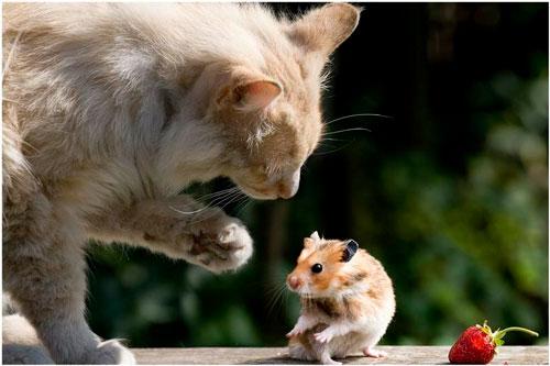 Интересные загадка про мышку