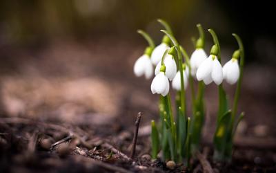 приметы погоды на весну: месяц апрель