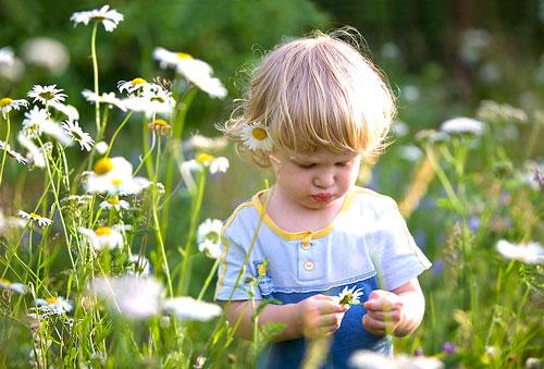 Загадка про ромашку для детей 7 лет