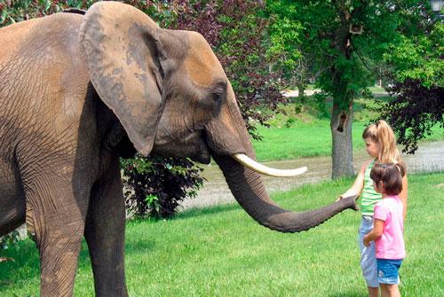 Загадка про слона для детей 7-9 лет