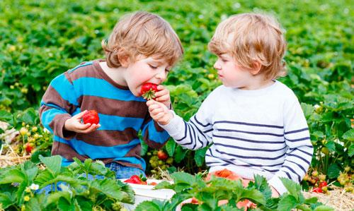 Интересные загадки про ягоды для детей 9-12 лет