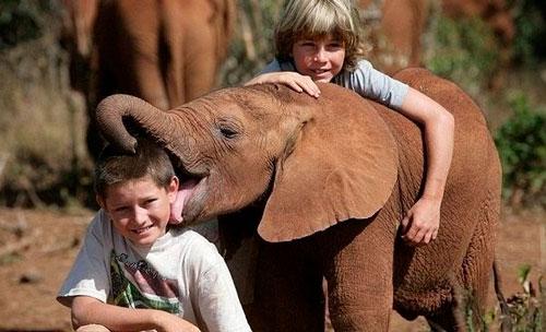 Детская загадка про слона