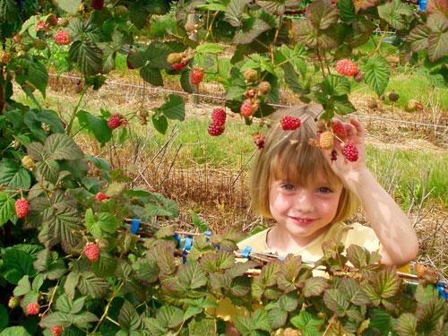 Интересные загадки про ягоды для детей