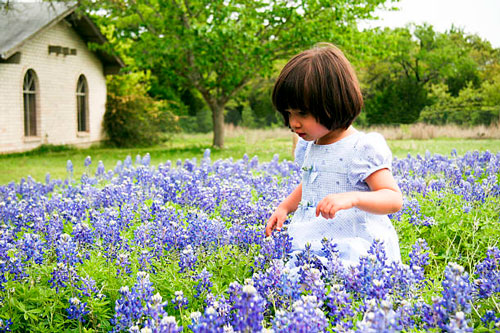 Стихи про цветы колокольчик для детей