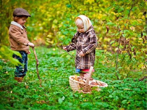 Интересные загадки про грибы для детей