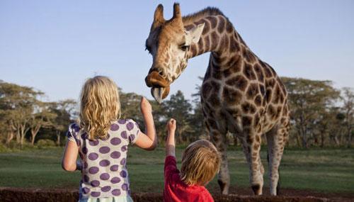детские загадки про жирафа для малышей