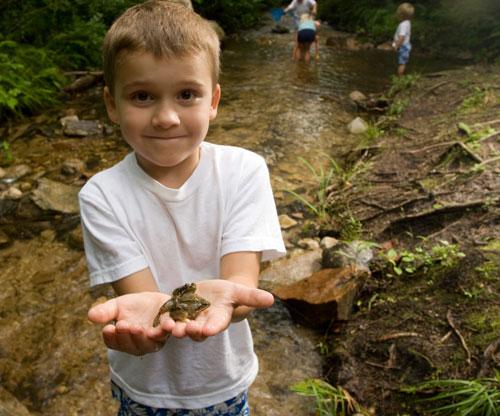 Детские загадки про лягушку