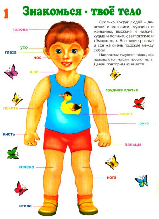 детские загадки про части тела