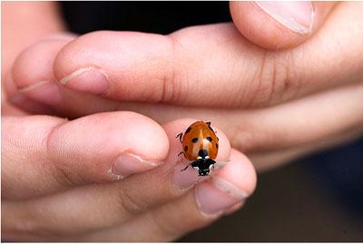 Загадки про насекомых для детейЗагадки про насекомых для детей