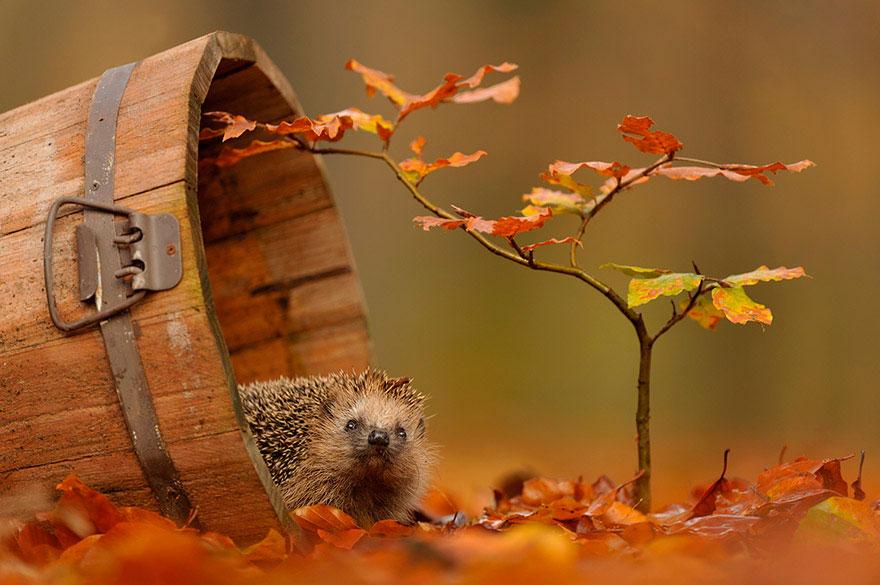 Пословицы и поговорки про осень для детей