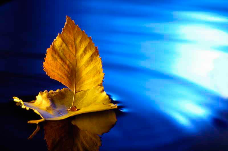 корабль из осенних листьев