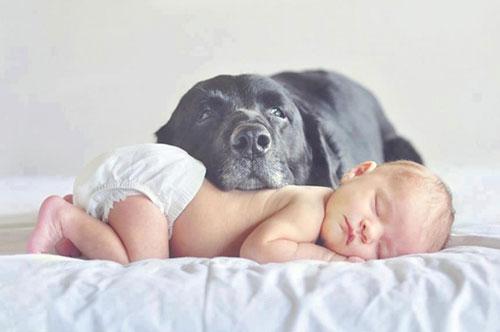 идеи для фотосессии новорожденных: дети и большие собаки