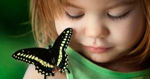 Стихи про насекомых для детей: бабочка